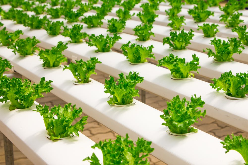 Visual presentation of hydroponic farming