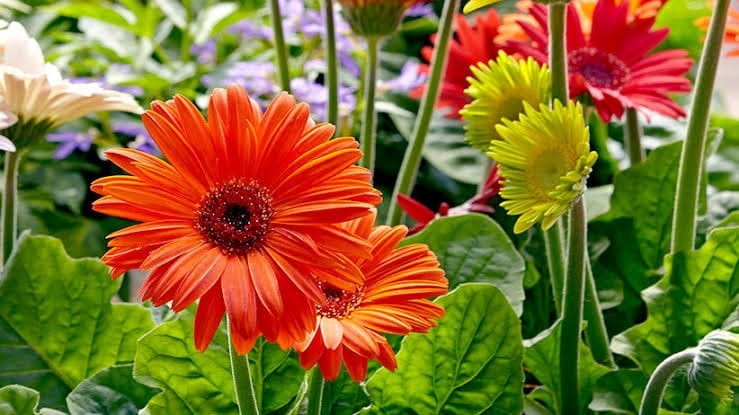 Floriculture Business In India 12