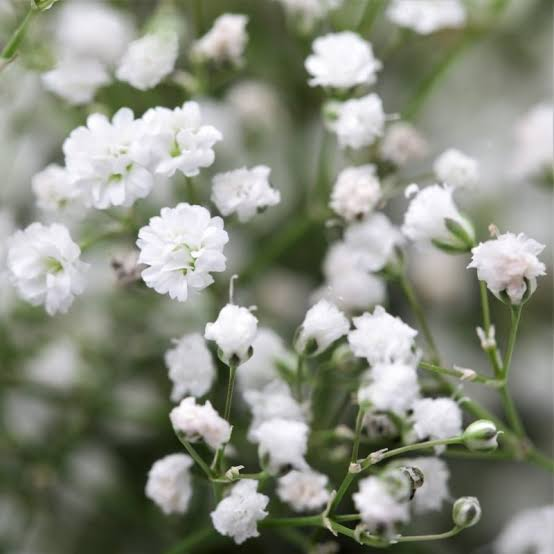 Floriculture Business In India 14