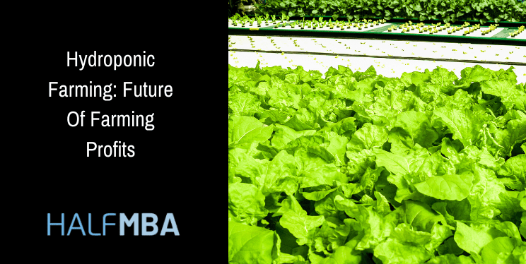 Hydroponic Farming: Future Of Farming Profits 5