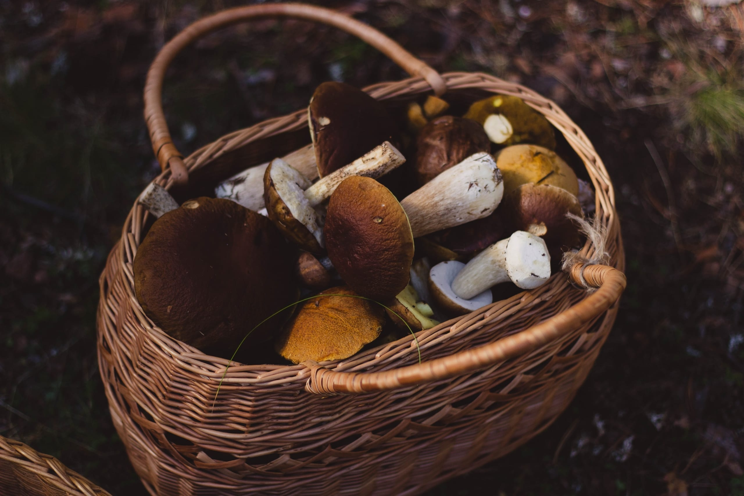 Start Mushroom Farming in India with Full Guide 4