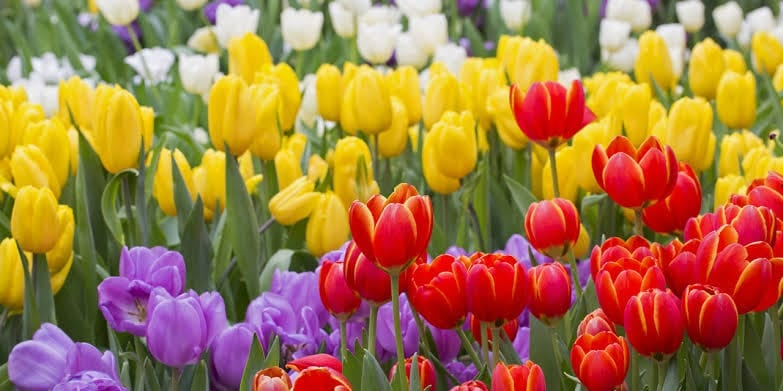 Floriculture Business In India 6