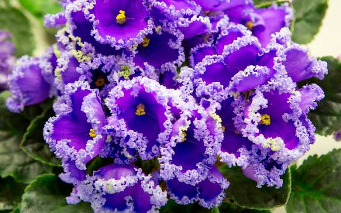 Floriculture Business In India 7