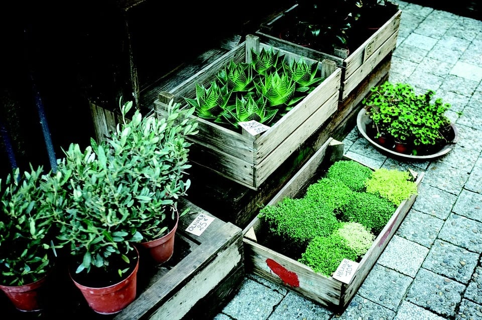 Start Your Own Plant Nursery