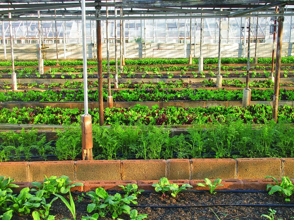 Urban Farming In India- It's Future and Benefits 3