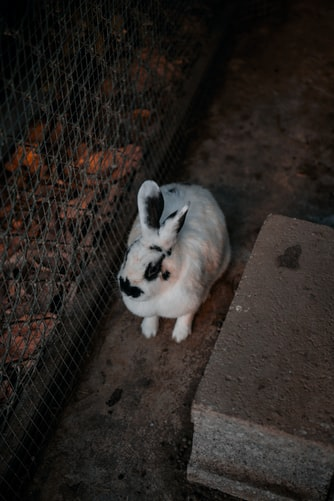 Rabbit Farming: A Complete Guide for Beginners 4