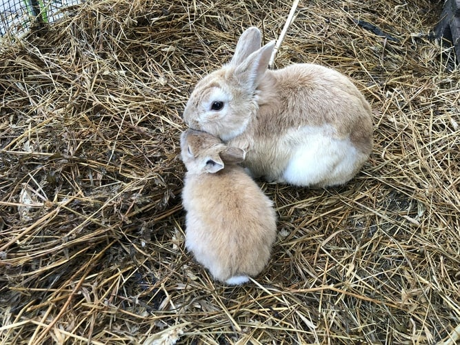 Rabbit Farming: A Complete Guide for Beginners 3